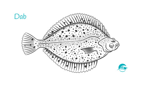 Detailed hand drawn vector black and white illustration of Dab fish