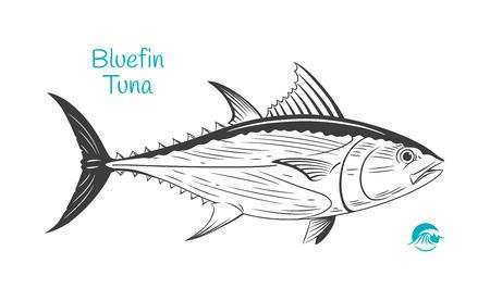 Illustration détaillée de vecteur noir et blanc dessinés à la main de thon rouge