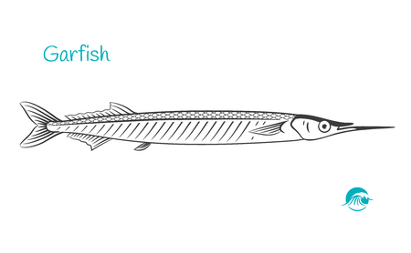 Detailed hand drawn vector black and white illustration of garfish or sea needle