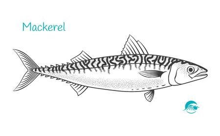 Illustration détaillée de vecteur noir et blanc dessinés à la main de poisson maquereau
