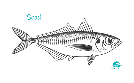 Scad hand-drawn illustration Ilustrace