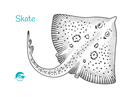 Skate hand-drawn illustration