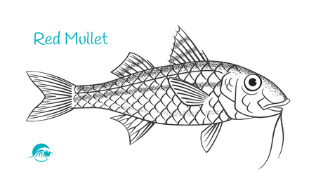 Detailed hand drawn vector black and white illustration of Red Mullet Standard-Bild - 122921118