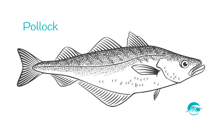 Detailed hand drawn vector black and white illustration of Pollock Çizim