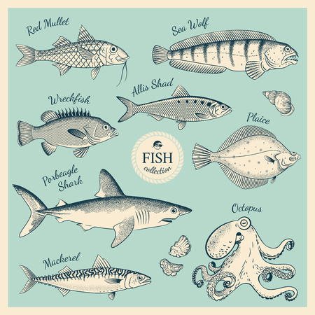 Vintage fish illustration set