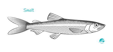 Smelt hand-drawn illustration