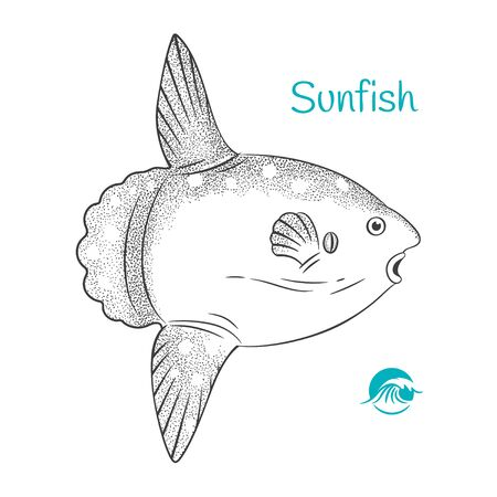 Detailed hand drawn vector black and white illustration of Sunfish