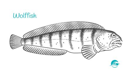 Wolffish hand-drawn illustration
