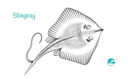 Stingray hand-drawn illustration Ilustrace