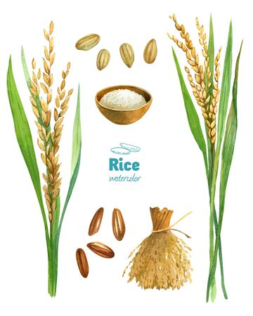 Rice watercolor illustration set with clipping paths Banque d'images