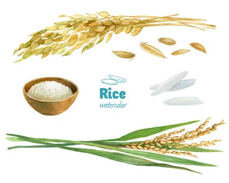 Rice watercolor illustration set with clipping paths Reklamní fotografie