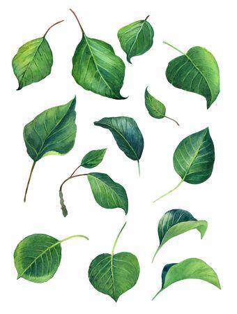 Green Leaves watercolour illustration set