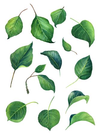 Green Leaves watercolour illustration set