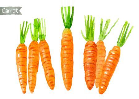 Carrots watercolor illustration
