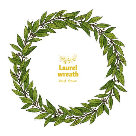Laurel Bay wreath detailed hand drawn vector illustration Ilustrace
