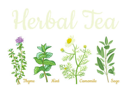 Collection of tea herbs isolated on white background. Thyme, mint, camomile, sage.