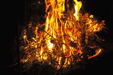 brunches: pinetrees brunches is burning in the night Stock Photo