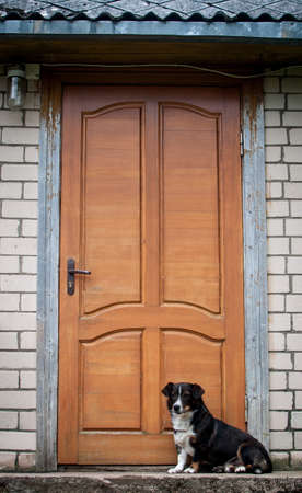 guard house: Faithful dog waits for his owner in front of the door