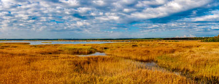 Autumn panorama of river with yellow reed under blue sky