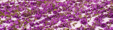 Carpet of violet flowers on the floor - romantic bed Stock Photo