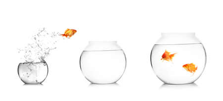 glass of bowl: Gold fish jumping out of water in fishbowl