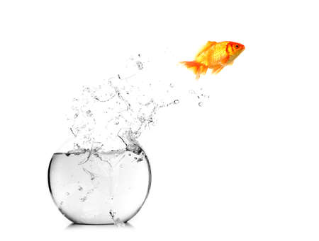 gold fish bowl: Gold fish jumping out of water in fishbowl