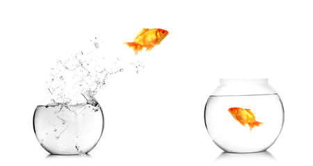 Gold fish jumping out of water in fishbowl  Stock Photo - 12223279