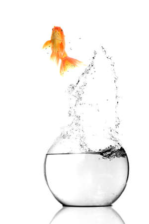 Gold fish jumping out of water in fishbowl  Stock Photo - 12223263