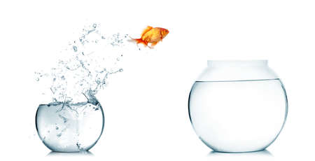 Gold fish jumping out of water in fishbowl Stock Photo - 12223311