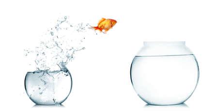 goldfishes: Oro pesce che salta fuori dall'acqua in acquario