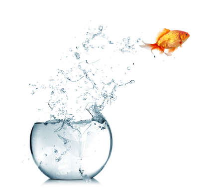 goldfishes: Pesce d'oro che salta fuori dall'acqua in fishbowl