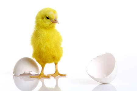 Colorful chick with broken egg Stock Photo - 12223289
