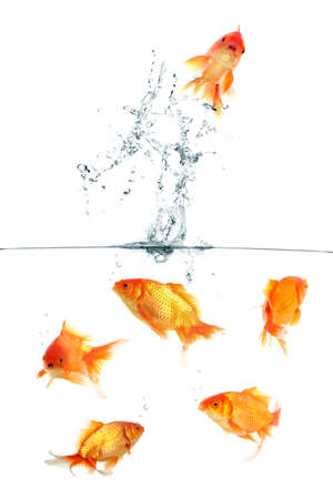 Gold fish jumping out of water photo