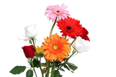 orange rose: Daisy flower and rose isolated over white background  Stock Photo