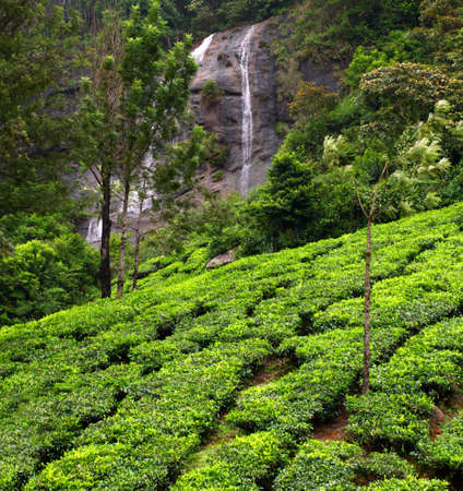 Tea plantations with water fall Munnar, Kerala, India photo