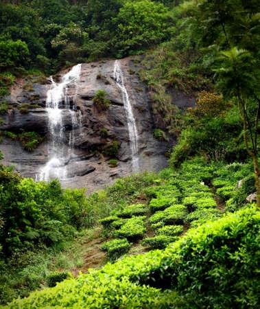 munnar: Tea plantations with water fall Munnar, Kerala, India