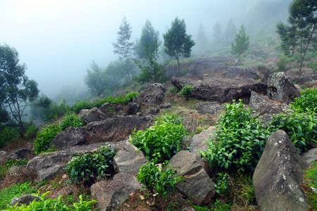 munnar: munnar mountain in kerala, India  Stock Photo