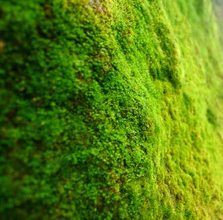 Macro on green plant. photo