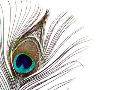 piuma di pavone: Primo piano di una piuma di pavone Archivio Fotografico