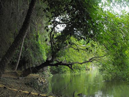 bird sanctuary: Ranganathittu bird sanctuary, Mandya district, Karnataka, India, Mysore