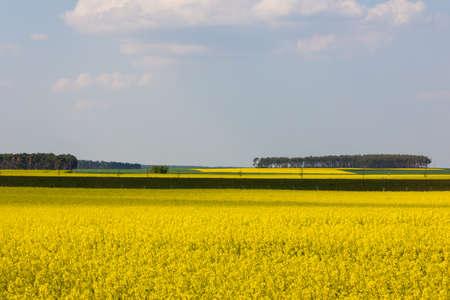 yellow rape fields are dotting  the german landscape in springtime Stock fotó