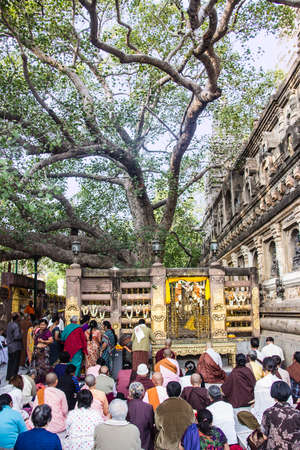 people are sitting and meditating underneath the bodhi tree, the tree under which the Buddha became enlightened