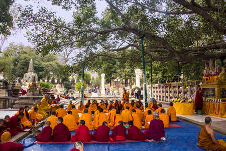 Tibetan buddhist monks are sitting and meditating underneath the bodhi tree, the tree under which the Buddha became enlightened