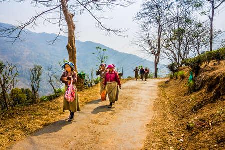 darjeeling: tea pickers in colorful clothes are walking through a tea plantation of Darjeeling