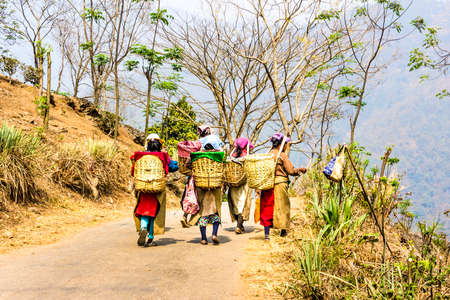 tea pickers in colorful clothes are walking through a tea plantation of Darjeeling, India   unrecognizable persons