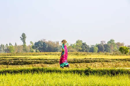 A nepalese farmer woman is working on the field  She wears a colorful red saree  photo