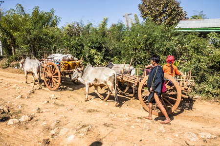 bullock: People from the PaO tribe are driving home from the market with their bullock cart.