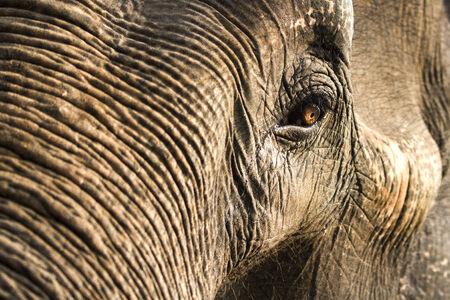 The sufari Femal Elephant from satpuda tiger reserve Madhyapradesh India