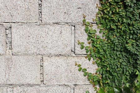 Wall brick nature background.
