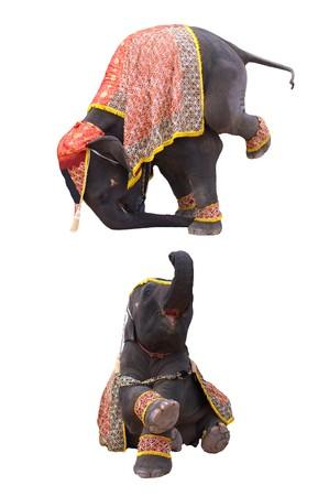 circus elephant: elephant show